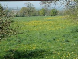 Field Opposite