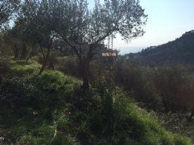 property in Albissola Marina