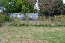 Rear garden showing polytunnel, fruit cage and vegetable beds