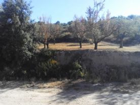 Olives and almond trees