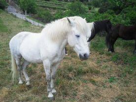 Horses in Serres