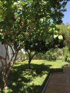 Lawned area with orange and lemon trees