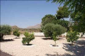 Olives and fruit trees