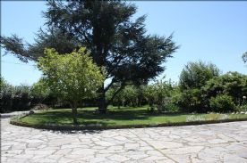 Front garden and large driveway for up to 10 cars + Blue spruce, magnolia, pond fruit trees