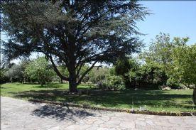 Front garden, fruit trees, pond and huge blue spruce.