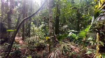 property in Penedo